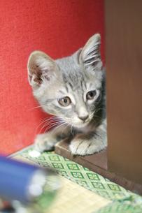 猫の写真素材 [FYI00051141]