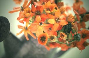 じょうろに入った花の写真素材 [FYI00051165]