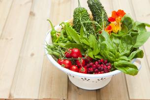 野菜の写真素材 [FYI00051186]