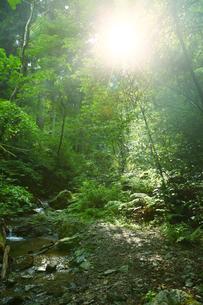 高尾山中の森の中に差す日差しの写真素材 [FYI00051307]