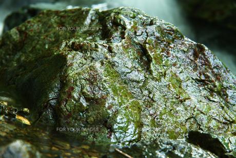 渓流の中の岩の写真素材 [FYI00051321]