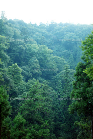 高尾山の写真素材 [FYI00051337]