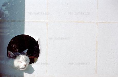 しあわせ猫の写真素材 [FYI00051348]