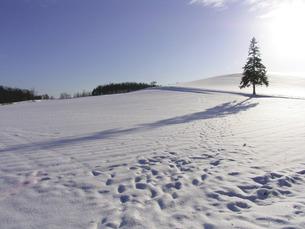 クリスマスツリーの木の素材 [FYI00051431]