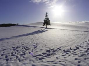 雪原の木の素材 [FYI00051462]