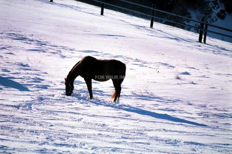 冬の牧場の素材 [FYI00051532]
