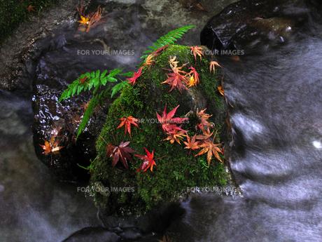 秋の風景の素材 [FYI00051536]