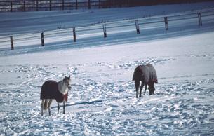 冬の牧場の素材 [FYI00051586]