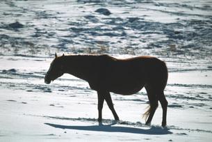 冬の牧場の素材 [FYI00051599]