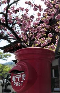 丸ポストと桜の素材 [FYI00051625]
