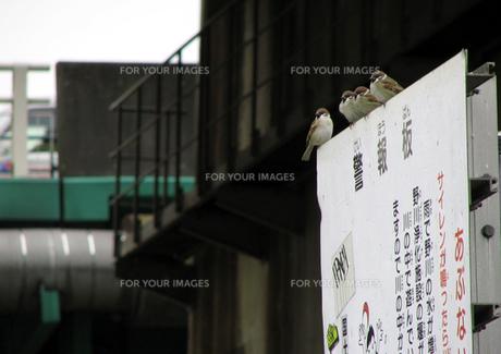 看板と雀の素材 [FYI00051633]