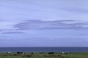 牧場とオホーツク海の素材 [FYI00051652]
