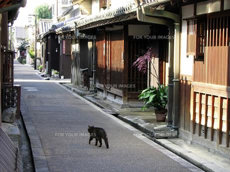 町中の猫の素材 [FYI00051656]