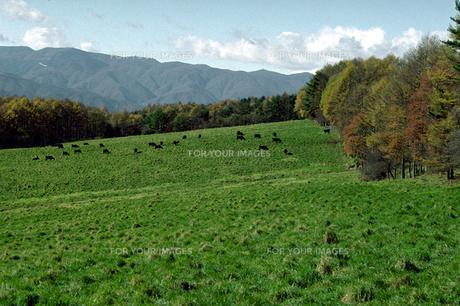 秋の牧場の素材 [FYI00051715]