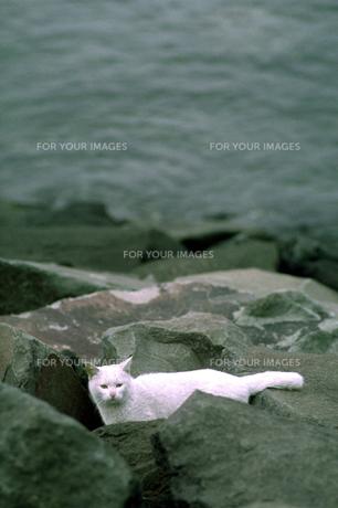 海岸の猫の素材 [FYI00051777]