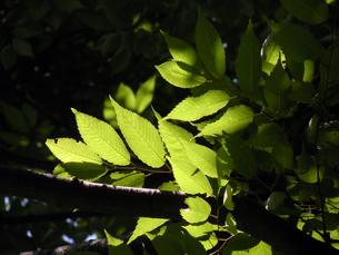 新緑の素材 [FYI00051804]