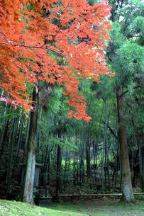 竹林と紅葉の素材 [FYI00051834]