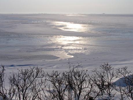 尾岱沼の冬の素材 [FYI00051841]