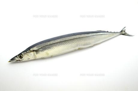秋刀魚の素材 [FYI00051972]