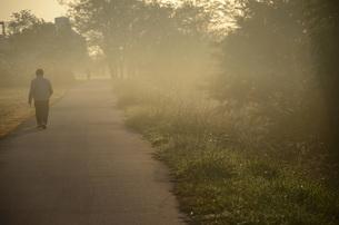 早朝の遊歩道の素材 [FYI00052025]