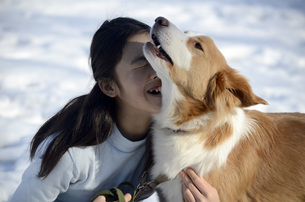 犬と遊ぶ少女の写真素材 [FYI00052394]