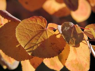 色づく葉の写真素材 [FYI00052668]