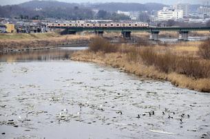 多摩川を渡る中央線の写真素材 [FYI00052704]