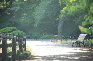 公園 道の写真素材 [FYI00053249]