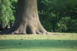 木の根の写真素材 [FYI00053251]