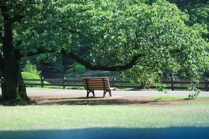 公園 ベンチの写真素材 [FYI00053256]