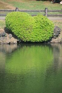 緑の写真素材 [FYI00053259]