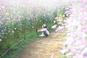 花畑の写真素材 [FYI00053313]