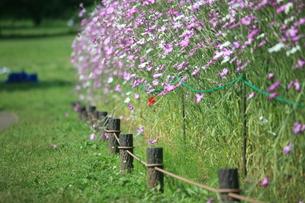 お花畑の写真素材 [FYI00053314]