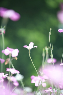 かわいい花の素材 [FYI00053320]