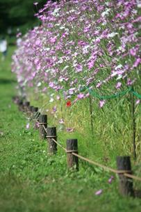 花畑の写真素材 [FYI00053322]