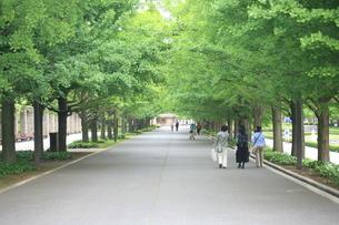 緑の道の写真素材 [FYI00053329]