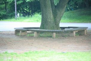 木の写真素材 [FYI00053331]