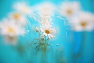 白い花の写真素材 [FYI00053341]