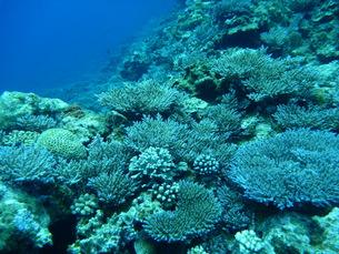 珊瑚礁の写真素材 [FYI00053632]