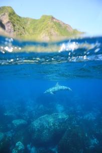 島とイルカの写真素材 [FYI00053736]