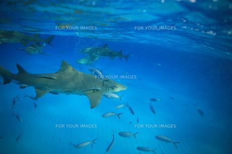 サメの素材 [FYI00054235]