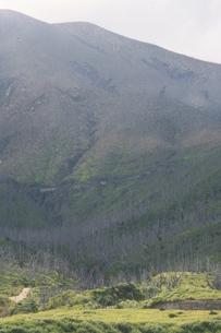 緑が増えてきた三宅島 2008年の写真素材 [FYI00054638]