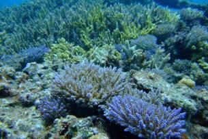 サンゴの子供の写真素材 [FYI00054669]