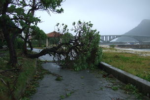 自然災害の写真素材 [FYI00054679]