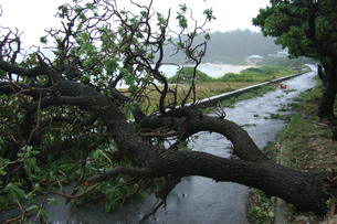 自然災害の写真素材 [FYI00054680]