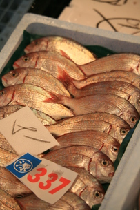 魚市場の写真素材 [FYI00054906]