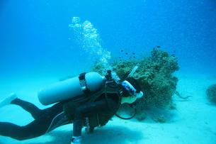 海中のダイバーの写真素材 [FYI00055039]
