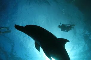 イルカの写真素材 [FYI00055259]