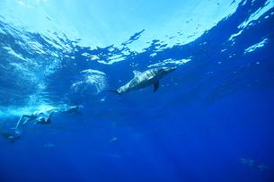 イルカの写真素材 [FYI00055267]