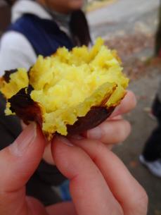 焼き芋の素材 [FYI00055404]